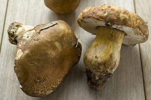 i-escape blog/ Where and when to enjoy Italy's harvest festivals / Mushrooms