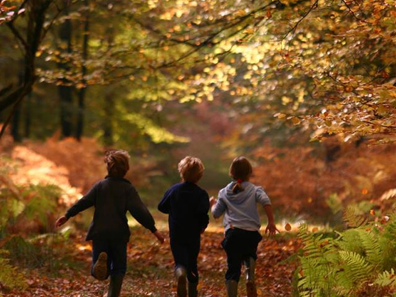 The i-escape blog / The 6 best places to see Britain's autumn colours / The New Forest