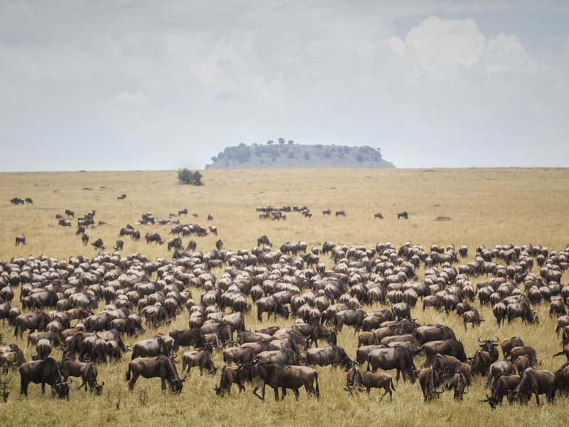 The i-escape blog / 10 best hotel rooms with amazing views / Great Migration from Sayari Camp