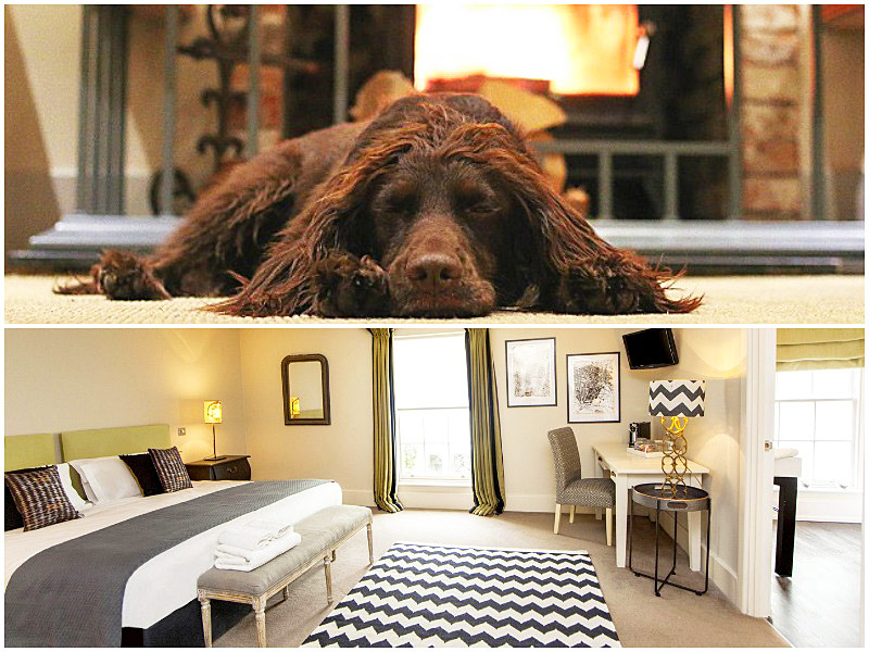 The i-escape blog / 12 pet-friendly UK hotels loved by dogs / The Grosvenor Arms