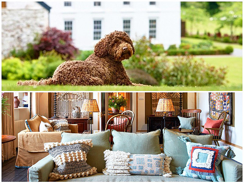The i-escape blog / 12 pet-friendly UK hotels loved by dogs / Grove of Narbeth