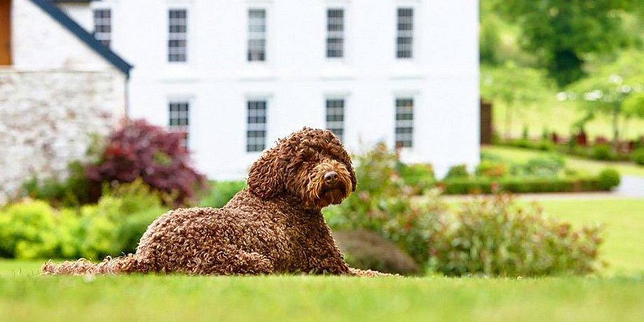 The 12 Best Dog-Friendly UK Hotels - Loved by Dog Owners