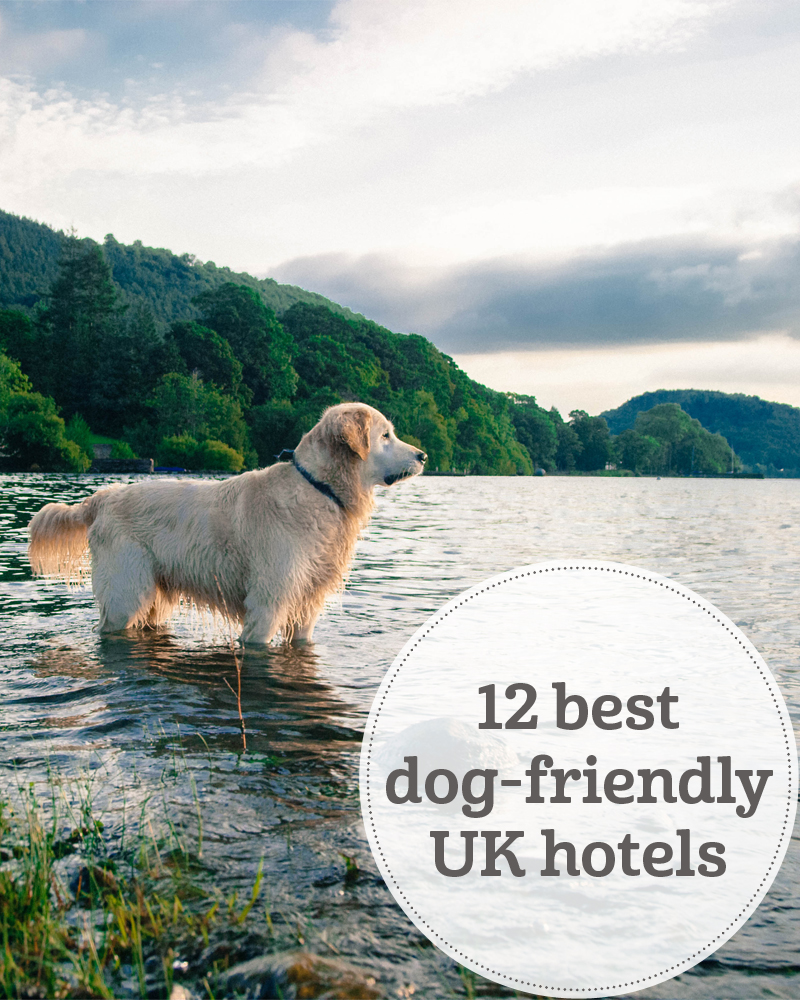 The i-escape blog / 12 best dog-friendly hotels loved by dog owners