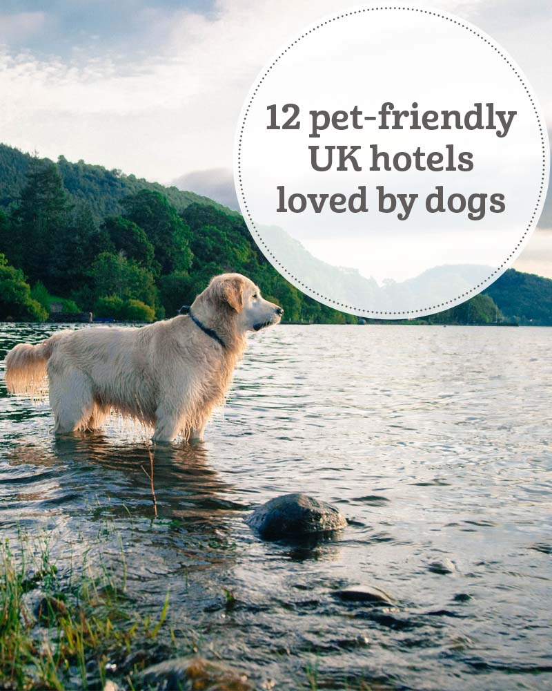 The i-escape blog / 12 pet-friendly UK hotels loved by dogs
