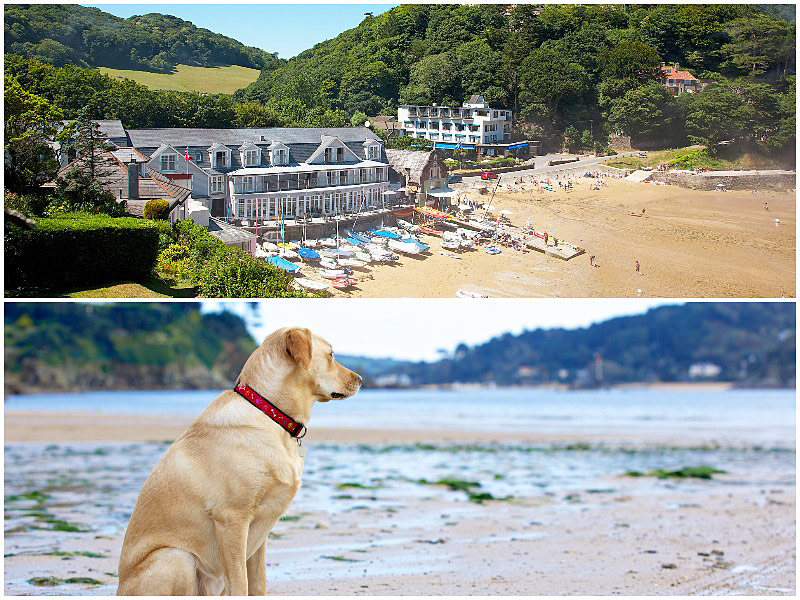 The i-escape blog / 12 pet-friendly UK hotels loved by dogs / South Sands Boutique Hotel