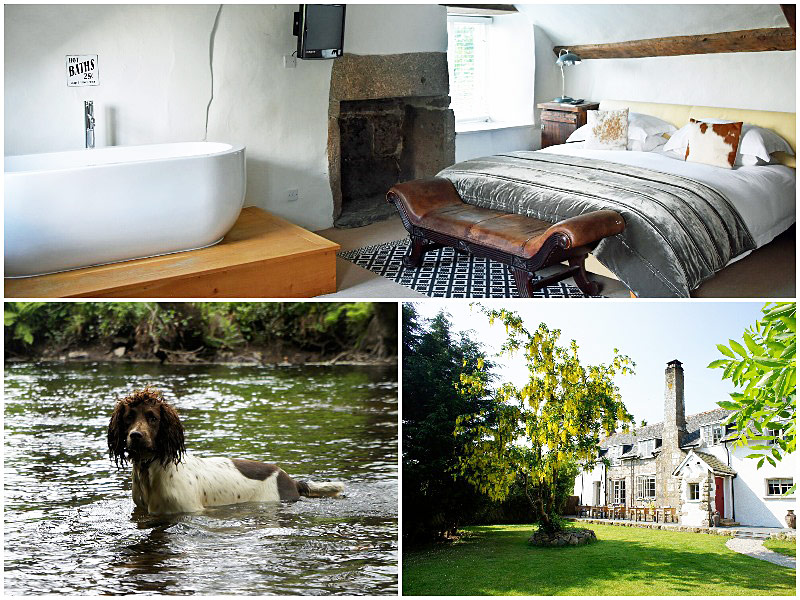 The i-escape blog / 12 pet-friendly UK hotels loved by dogs / Weeke Barton