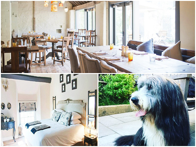 The i-escape blog / 12 pet-friendly UK hotels loved by dogs / White Hart Somerton
