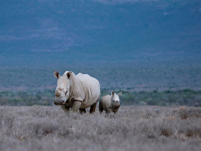 The i-escape blog / 7 Extraordinary Adventures for your Bucket List / Tailormade Tours South Africa