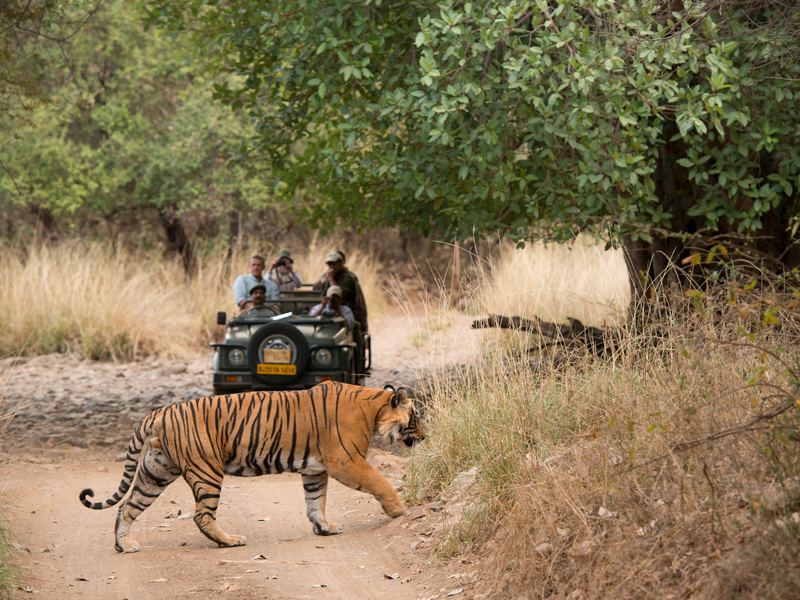 The i-escape blog / 7 Extraordinary Adventures for your Bucket List / Tailormade Tours Northern India