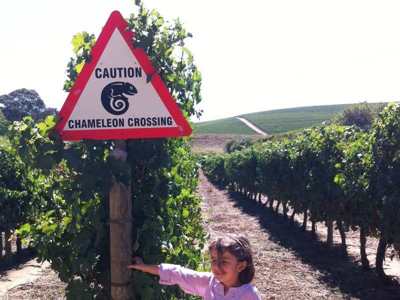 The i-escape blog / Cape Winelands with kids /