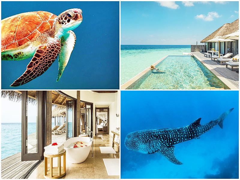 The i-escape blog / best long haul holidays travel 2020 / Maldives Como Maalifushi