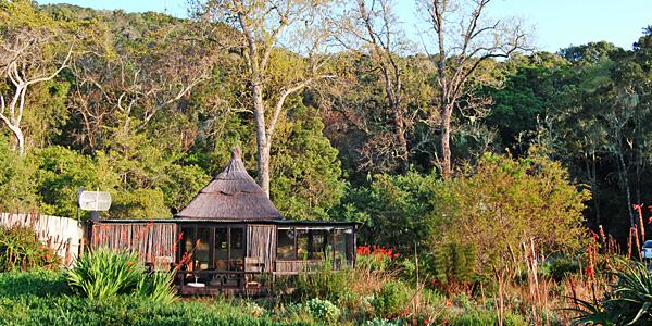 Phantom Forest, South Africa