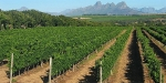 Four Rosmead, South Africa, Vineyards at Stellenbosch