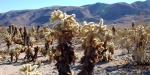 Spin and Margie's Desert Hide-a-way, United States, Cholla Cactus Garden
