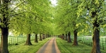 Langar Hall, United Kingdom, Avenue of lime trees