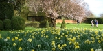 Langar Hall, United Kingdom, Daffodils and the croquet lawn